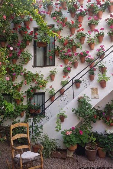 Patio cordobés repleto de macetas de flores sobre una pared blanca. Destaca una silla de madera frente a ésta.