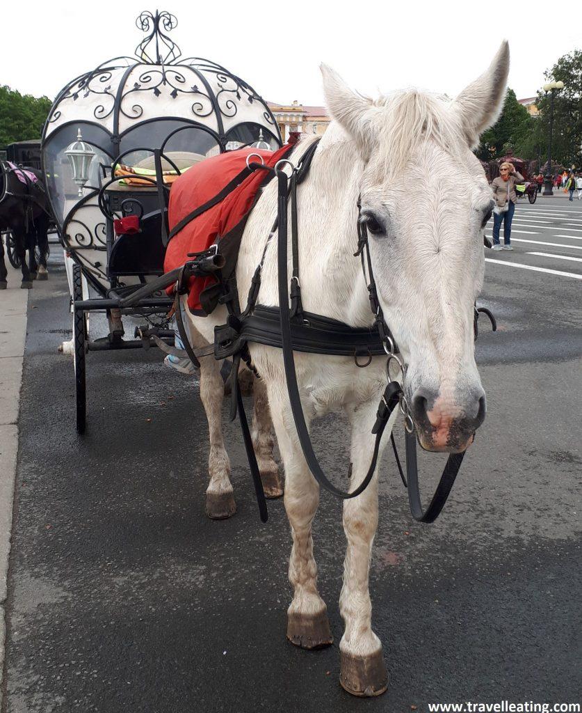 En la foto se ve un caballo hermoso blanco en primer plano que lleva atrás atado un carruaje tipo cenicienta, redondo, transparente, como si fuera una carroza. Está en medio de la calle.