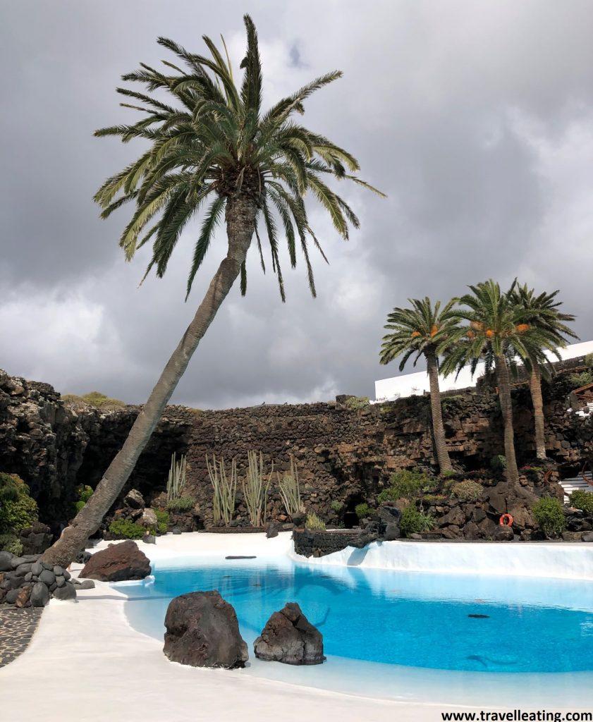 Pequeña piscina de aguas turquesas en medio de un suelo blanco y rodeada de piedras volcánicas negras. A su lado se alza una gran palmera inclinada,y tras ella unas tres más. Uno de los lugares más populares que ver en Lanzarote.