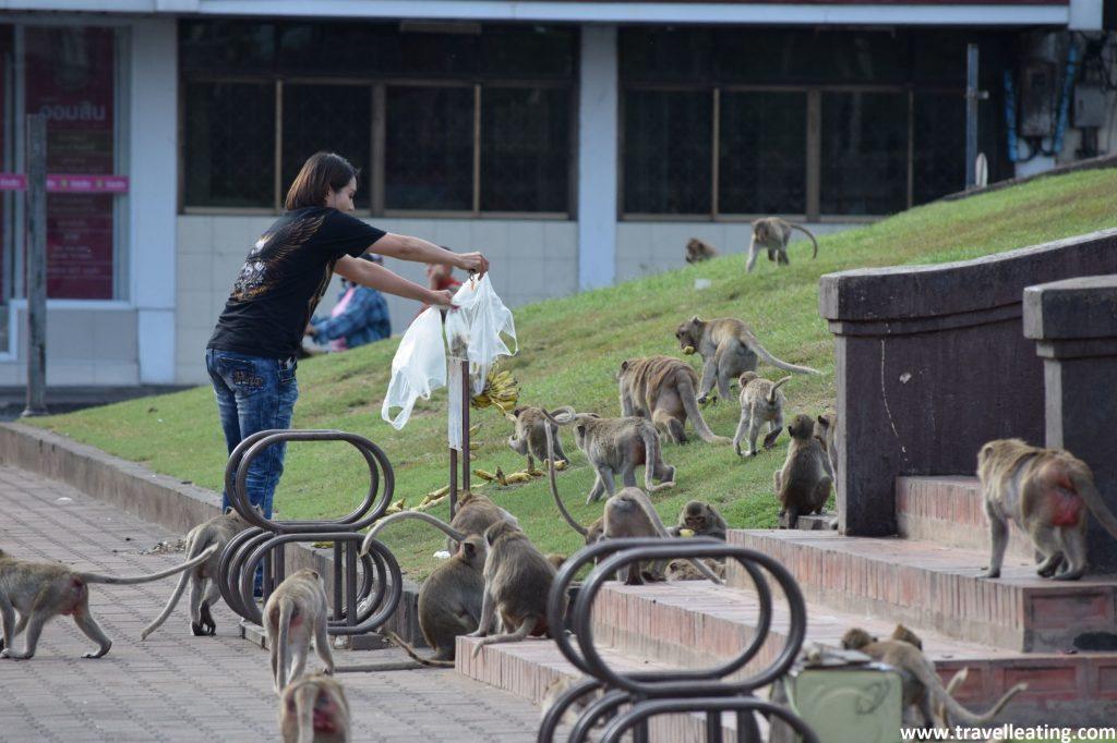 En Lopburi los locales se han acostumbrado a convivir y alimentar a los monos de la zona, animales que ya viven en la ciudad.