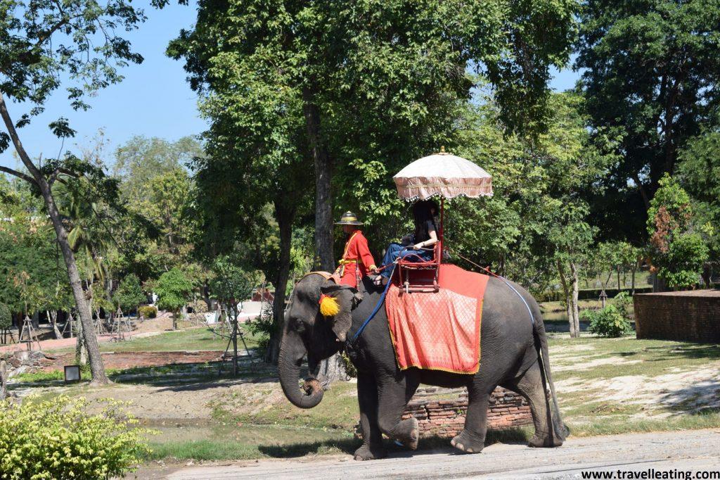 Elefante llevando encima una silla con parasol y una mujer encima, además de su mahout (o entrenador) sentado encima del cuello, en una calle de Ayutthaya. No se debería viajar a Tailandia con estos propósitos.
