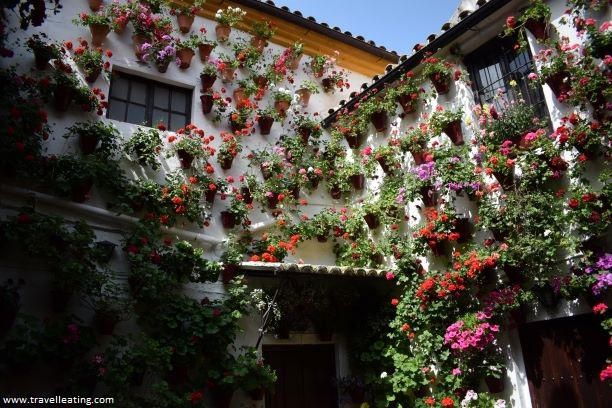 Precioso patio cordobés cuyas paredes no se ven de tantas macetas que hay. Es uno de los patios que hay que ver en Córdoba.