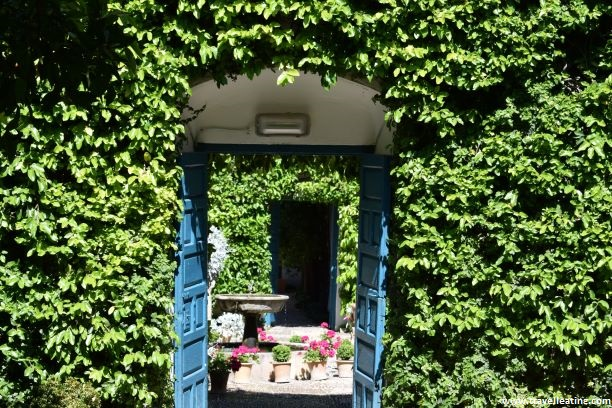 Pared repleta de hojas verdes de enredadera con una pequeña puert azul que se encuentra abierta y a través de la cual se ve un bonito patio cordobés.