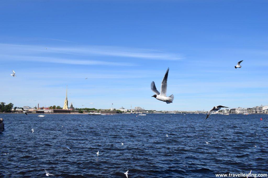 Imagen del río Neva tomada desde un puente. El agua está bastante movidita por el viento y se observan aves sobrevolándolo. Al fondo distinguimos la fortaleza de San Pablo y San Pedro con su catedral de color amarillento que sobresale.
