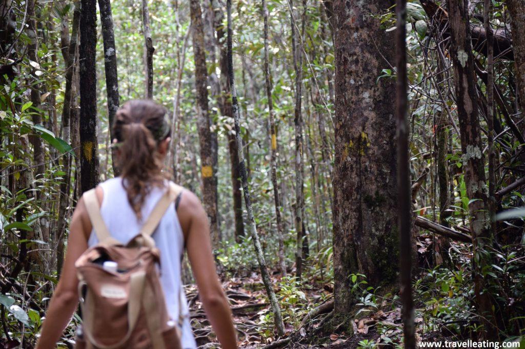 De ruta por el Parque Nacional de Bako.
