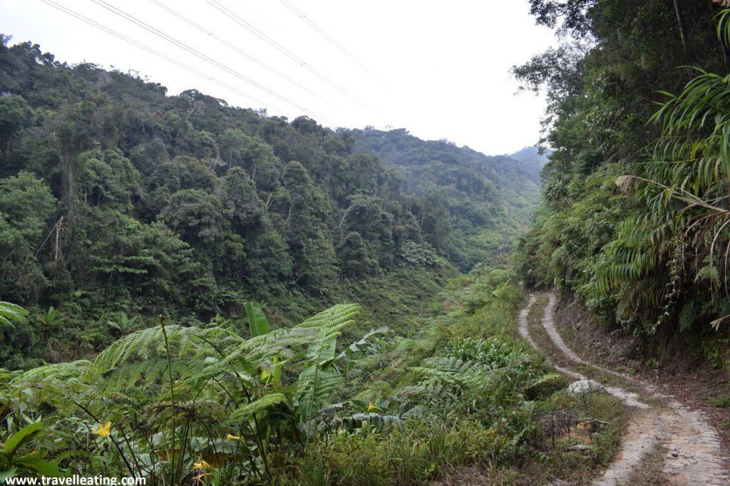 Ruta 6 del trekking por Cameron Highlands.
