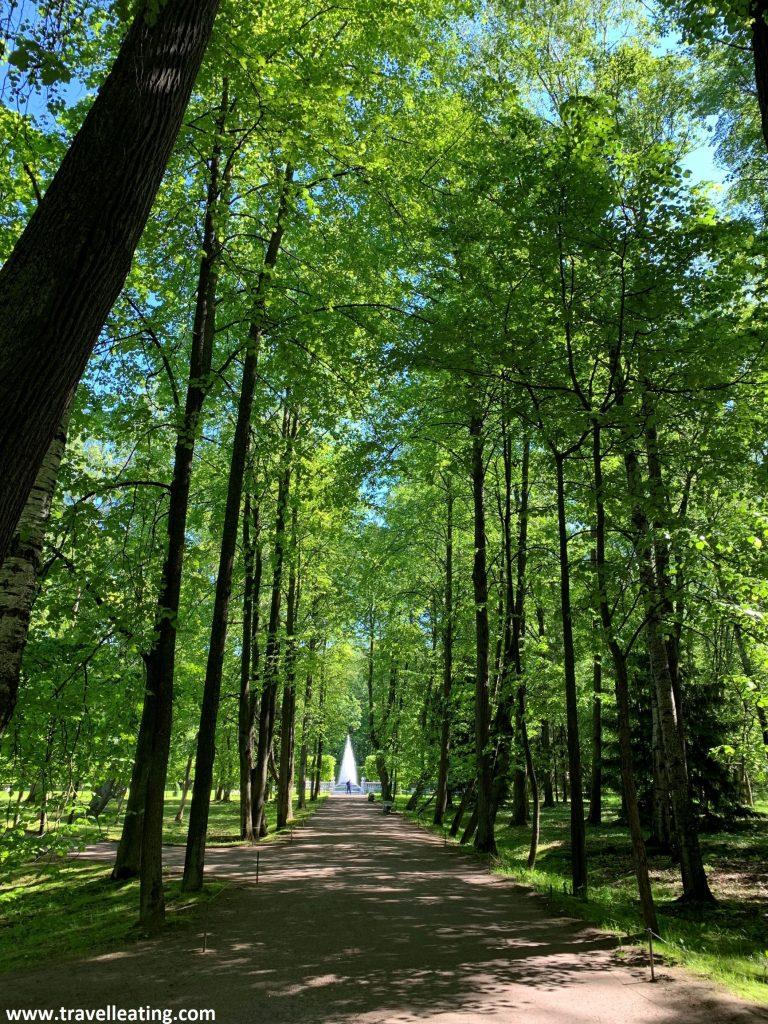 Camino rodeado de altos árboles verdes que cubren todo el cielo. Al final del camino se ve una pequeña fuente piramidal.