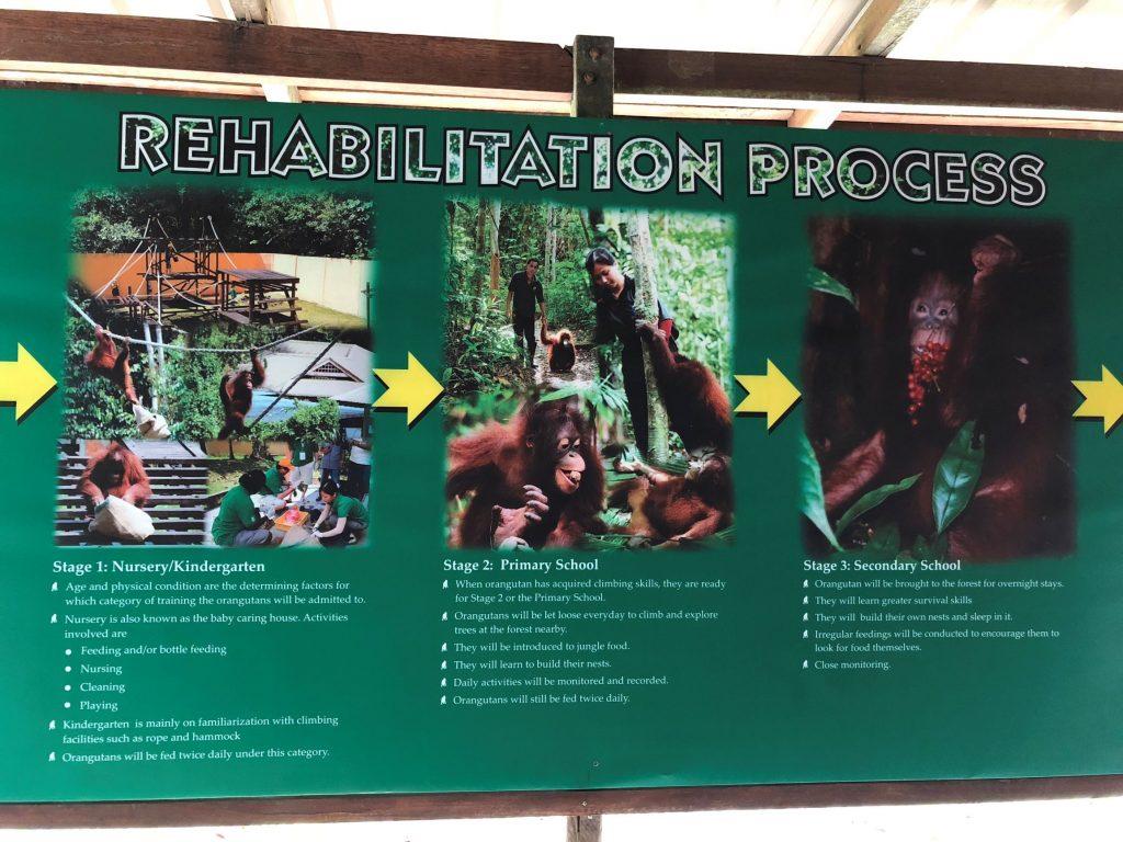 Cartel informativo de Semenggoh.