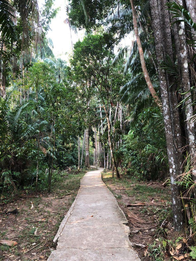 Inicio de una de las rutas de senderismo. Parque Nacional de Bako, Malasia.