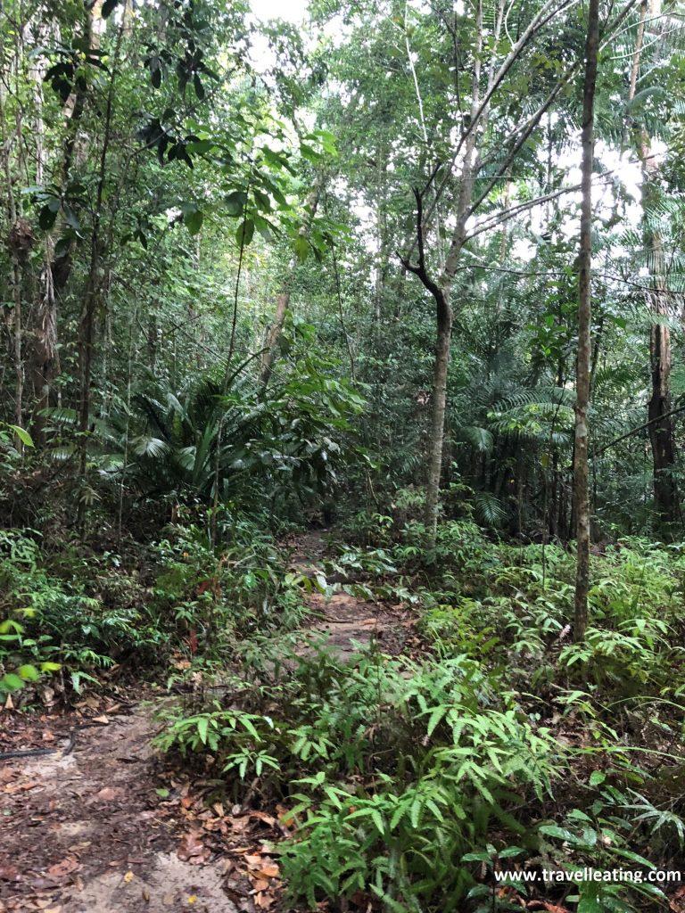 Selva del Parque Nacional de Penang.