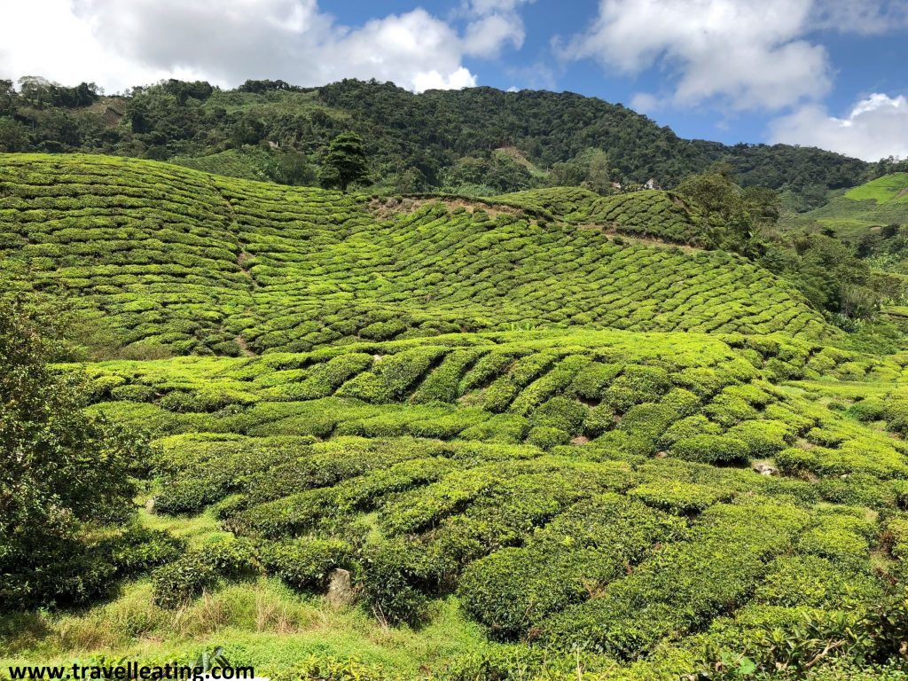 Cameron Highlands, Malasia.