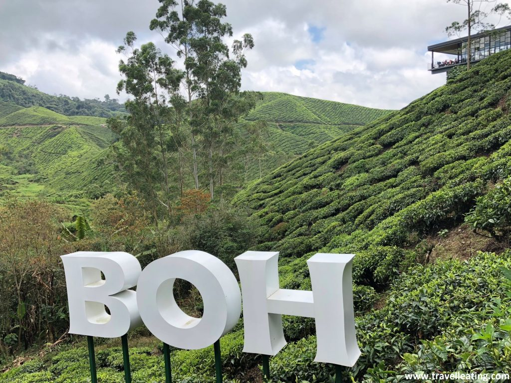 Boh Sungai Palas Tea Plantation. En las Cameron Highlands.