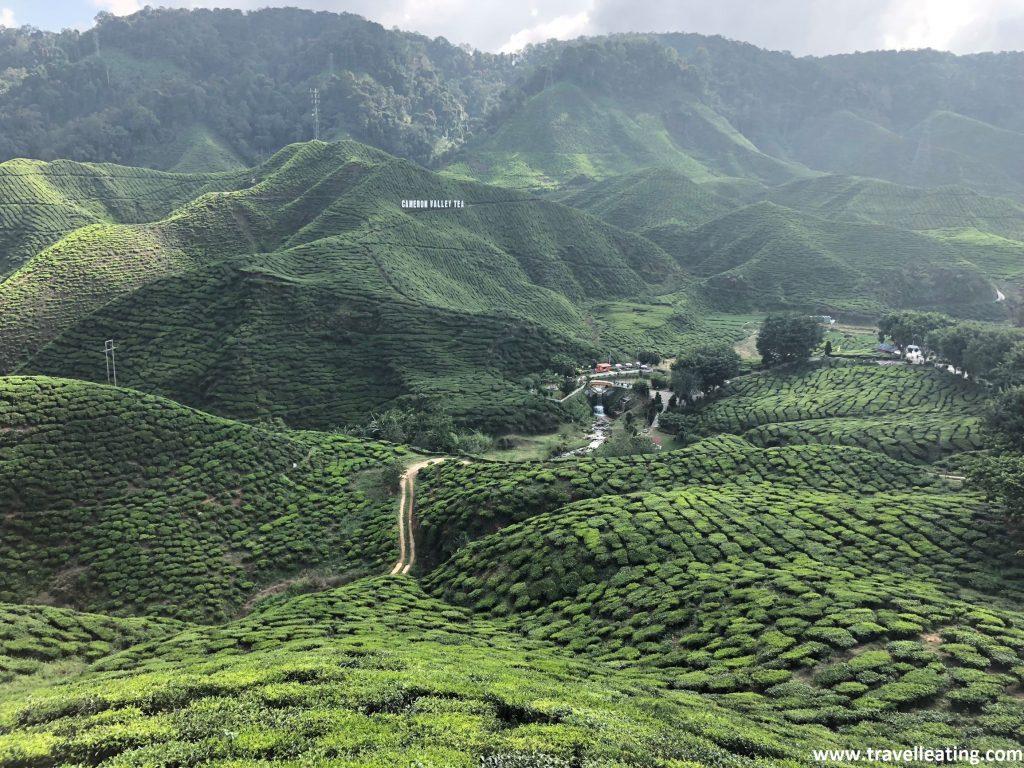 Cameron Valley Tea Plantation. Otra de las plantaciones importantes de té de las Cameron Highlands.