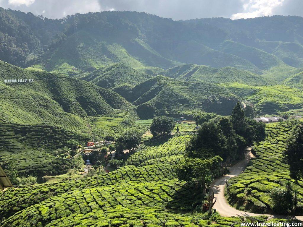 Vistas desde la cafetería de la plantación de té de Cameron Valley. Cameron Highlands, Malasia.