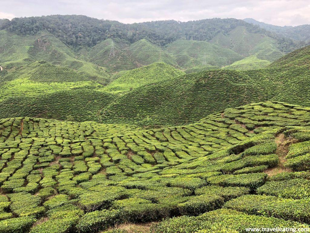 Vistas des del mirador de la plantación de té de Bharat. En las Cameron Highlands.
