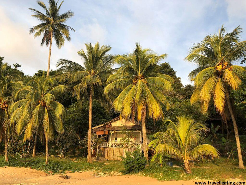 El alojamiento entre palmeras de Mira Beach. Perhentian Kecil.
