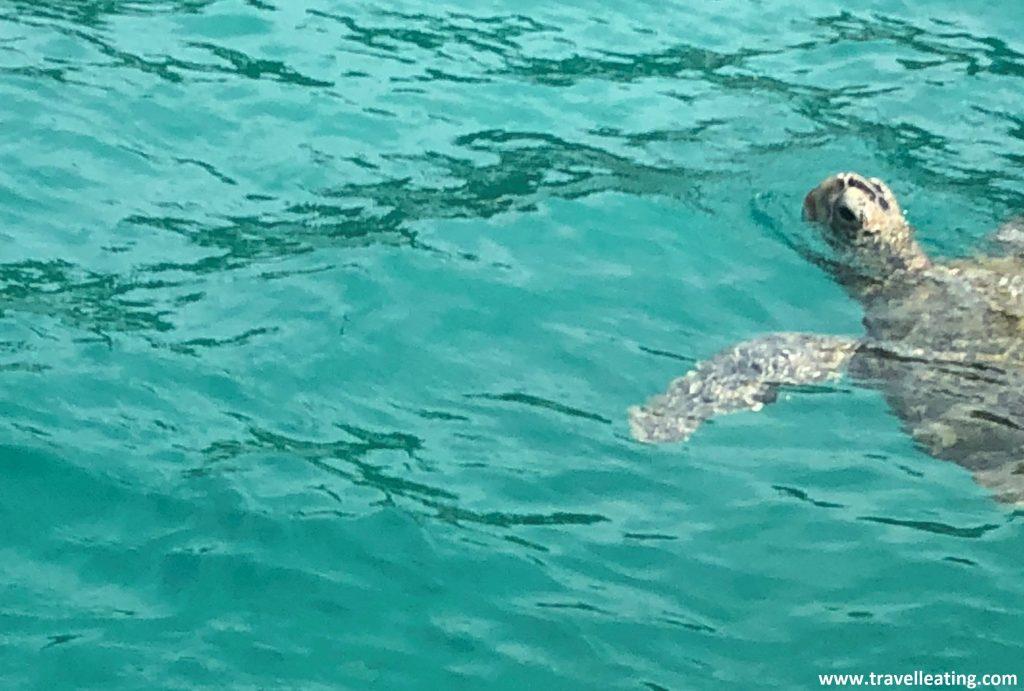 Avistamiento de las tortugas des del barco en Turtle Point. Antes de saltar al agua.