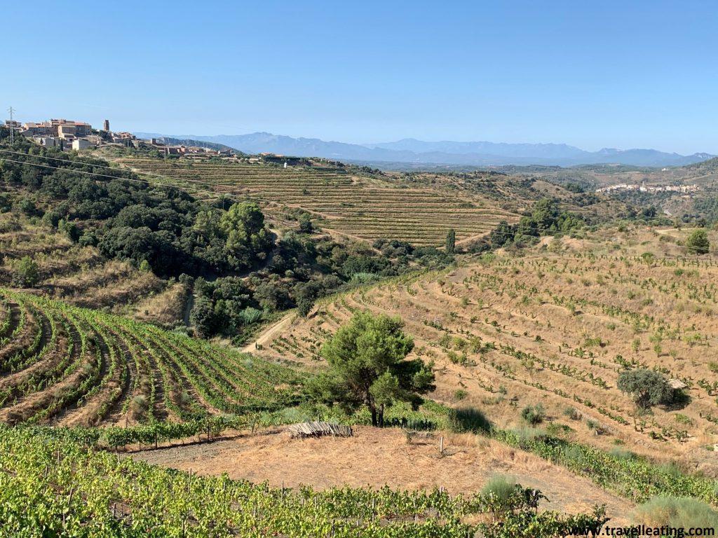 Preciosas vistas de unas viñas rodeadas de montañas. A lo alto de una colina situada en la izquierda resalta un pequeño pueblo con una iglesia.