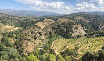 Paisaje de montañas repletas de viñedos visto desde un mirador. Una de las mejores cosas que ver y hacer en El Priorat
