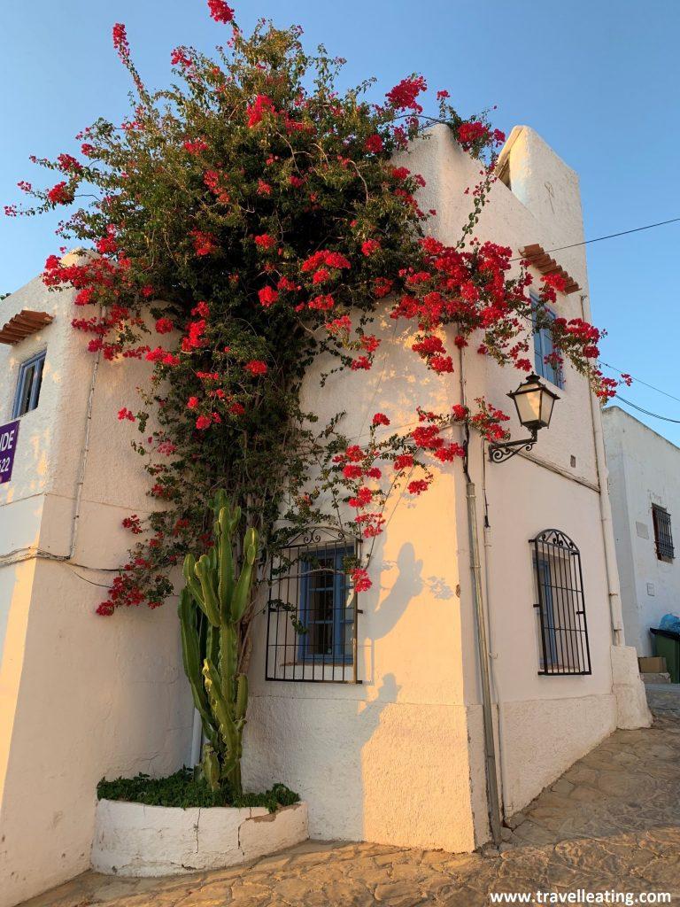 Casa blanca con ventanales turquesas y una enorme y preciosa planta que recubre prácticamente la totalidad de la fachada latetarl, con una flores rojas intensas.