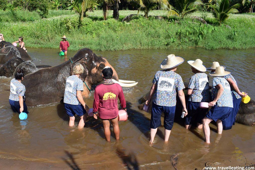 turistas bañando en una charca a tres elefantes asiáticos de un centro que se hace llamar engañosamente santuario. Todos llevan el vestuario del centro y un cubo y cepillo para bañarlos. Los elefantes se encuentran tumbados sin moverse. Es facil viajar a tailandia y confundir falsos santuarios