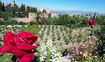 Primer plano de unas rosas rojas con un campo verde atrás y la Alhambra de fondo.