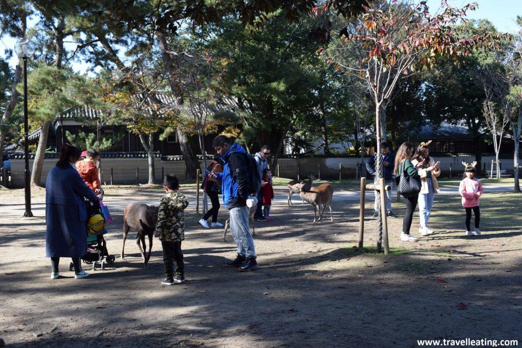 Turistas alimentando a ciervos en el Parque de Nara