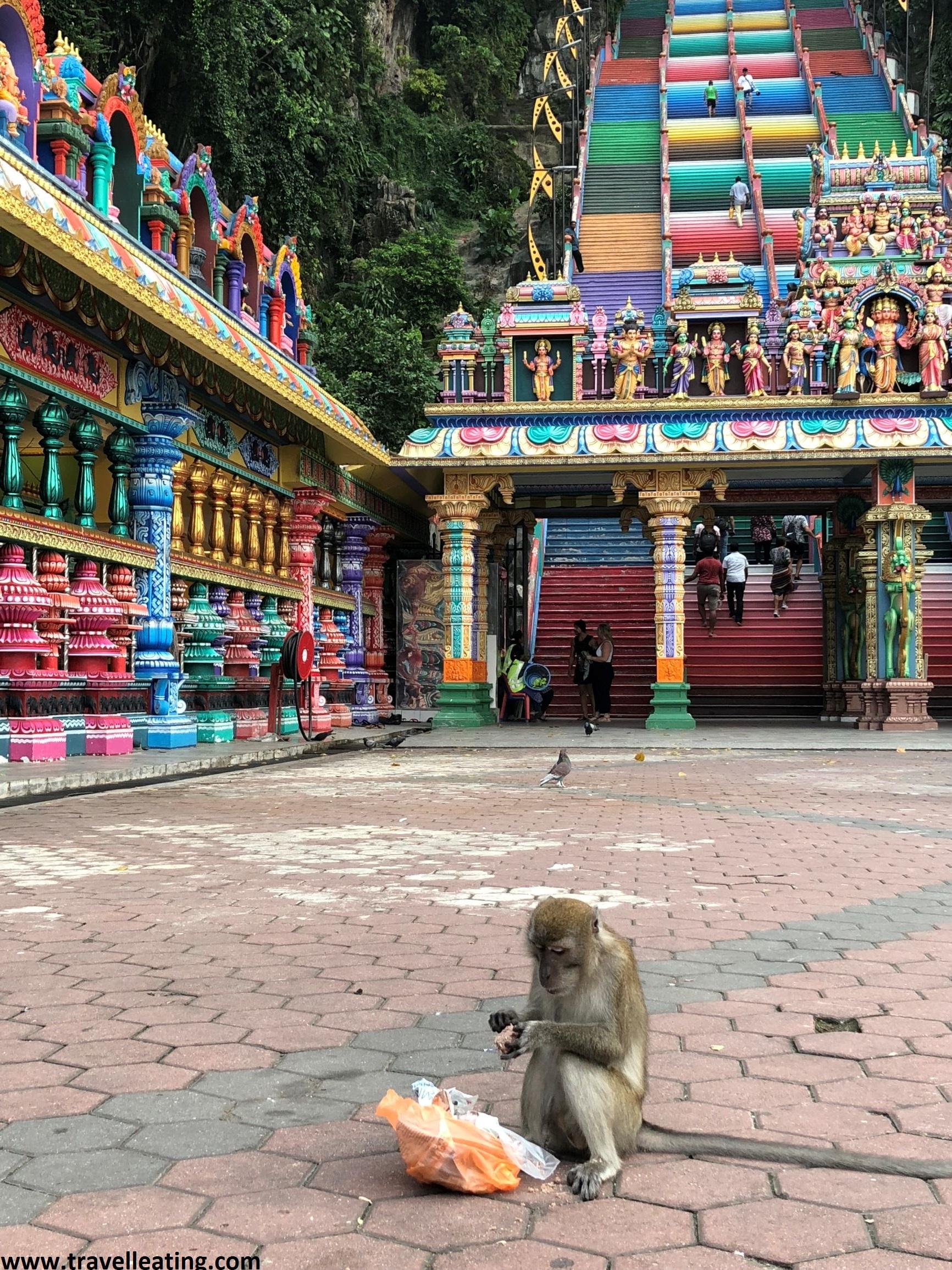 Alimentar a animales en templos budistas es algo muy popular, especialmente a los monos. Este es el caso de las Batu Caves.